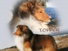 ladymagic-sheltie-topper-cr-ad
